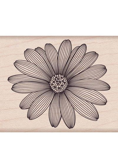 Etched Daisy
