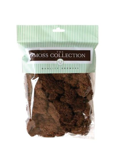 Walnut - Preserved Reindeer Moss 108.5 Cubic Inches