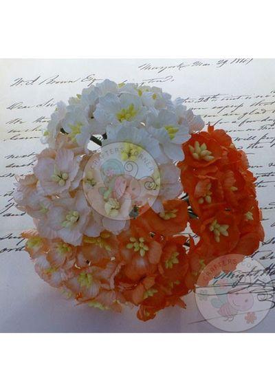 Orange/White - Sakura Combo