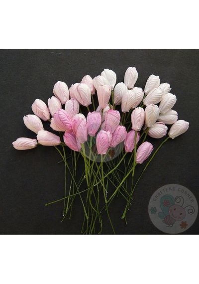 Pink Tone - Tulip Buds Combo