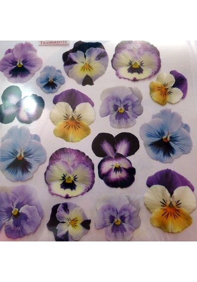 Film with printed image Pansy