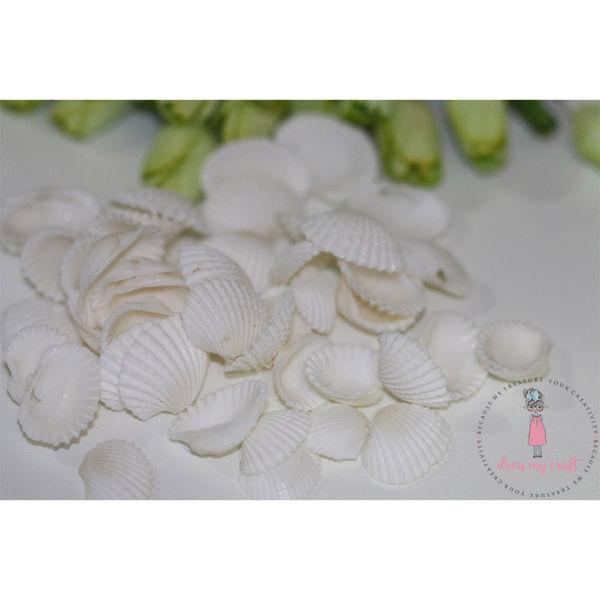 Natural Sea Shells 2