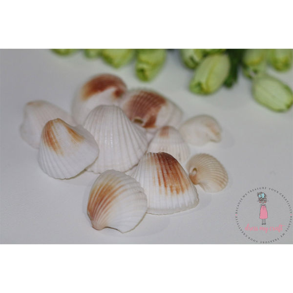 Natural Sea Shells 3