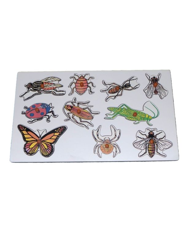 Name the Insects