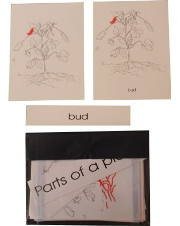 Terminology Cards: Parts of plant