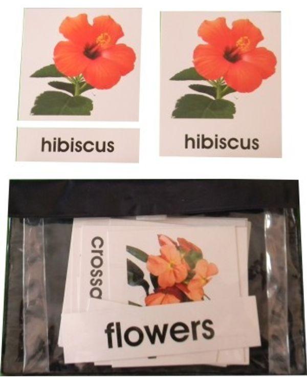 3 Part Nomenclature Cards: Flowers
