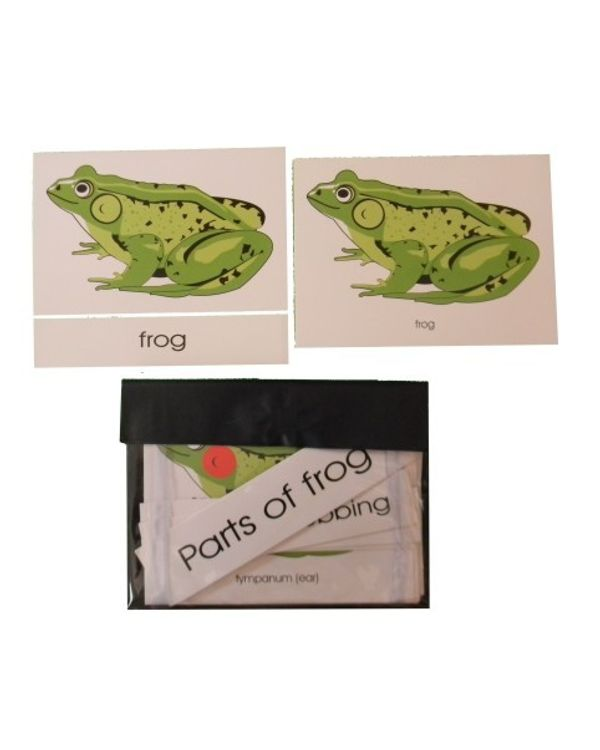 Terminology Cards: Parts of frog