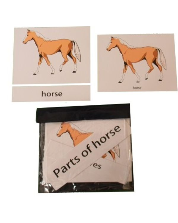 Terminology Cards: Parts of horse