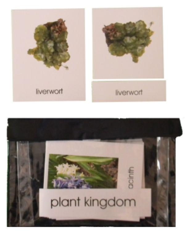 3 Part Nomenclature Cards: Plant Kingdom