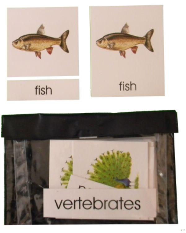 3 Part Nomenclature Cards: Vertebrates