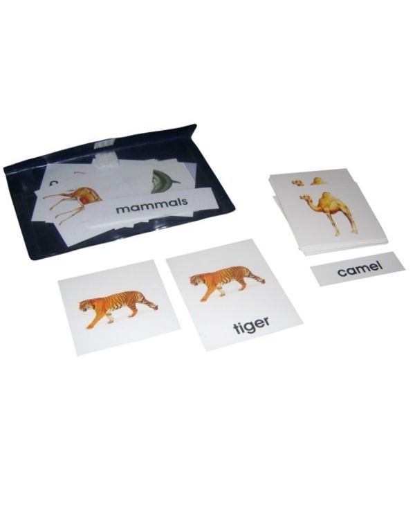 3 Part Nomenclature Cards: Mammals