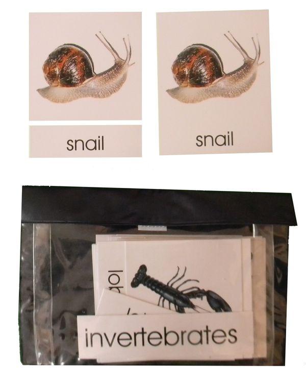 3 Part Nomenclature Cards: Invertebrates
