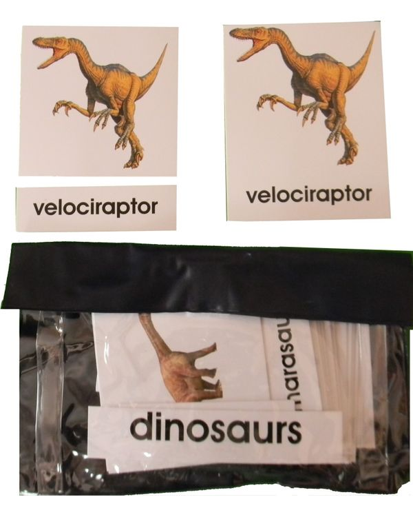 3 Part Nomenclature Cards: Dinosaurs