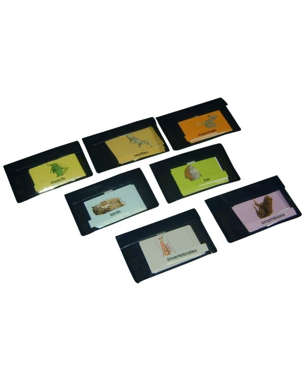 Loosely grouped Animals: Set of 7