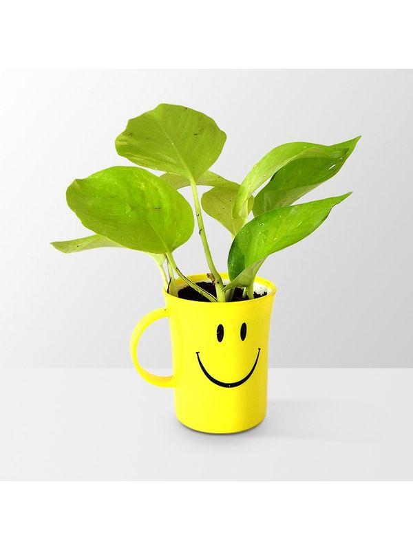 Good Luck Golden Pothos in Smiley Cup