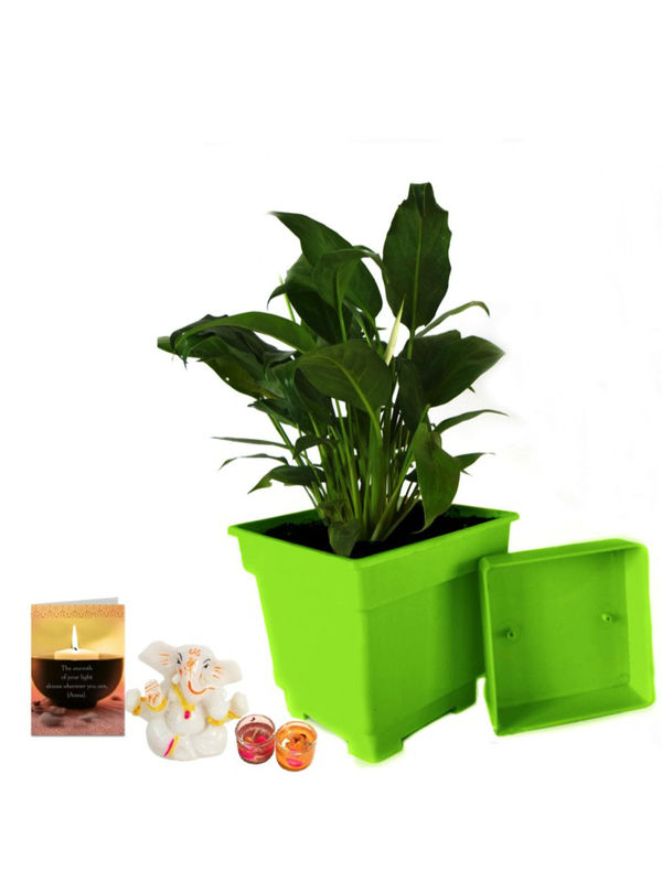 Good Luck Peace Lily in Green Square Colorista Pot and Ganesha with Candle Combo