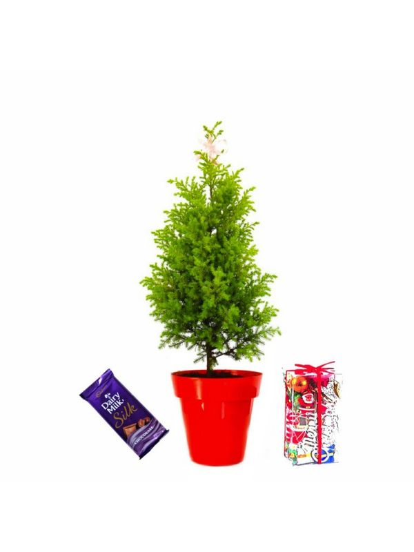 Rolling Nature Christmas Tree with Accesories and Dairy Milk