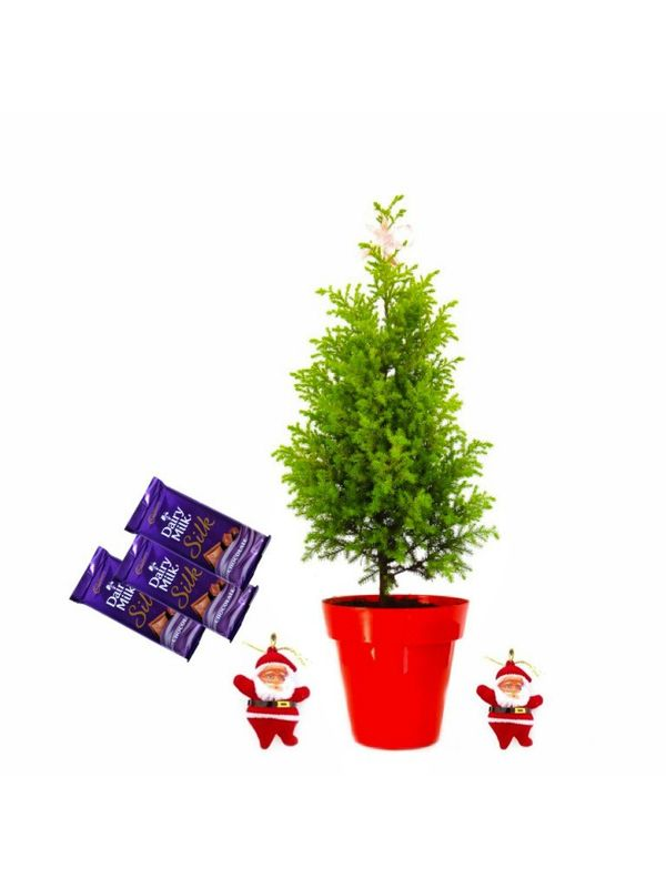 Rolling Nature Christmas Tree, Santa and 3 Dairy Milk Combo