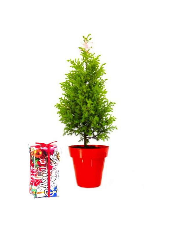 Rolling Nature Christmas Tree with Accessories