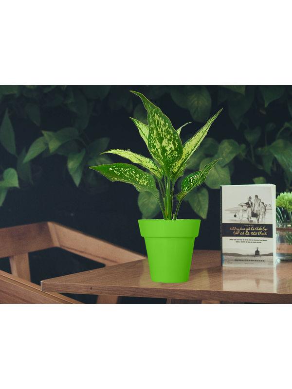 Aglaonema Green in Green Colorista Pot