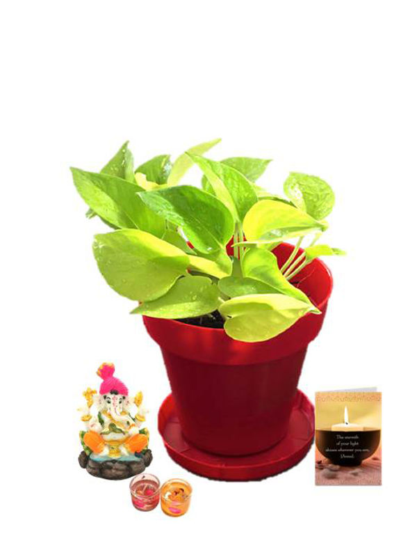 Golden Pothos in Red Colorista Pot and Pagdi Ganesha with Candle Combo