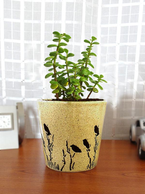 Rolling Nature Good Luck Jade Plant in Brown Bucket Aroez Ceramic Pot