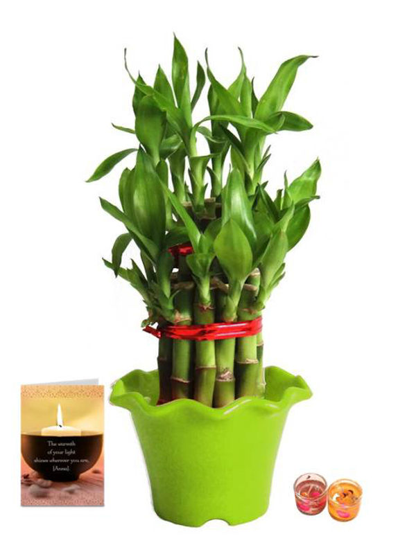 2 Layer Lucky Bamboo in Green Blossom Pot with Candle Combo