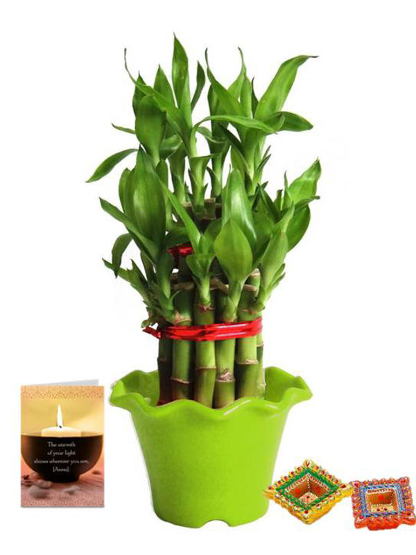 2 Layer Lucky Bamboo in Green Blossom Pot with Diya Combo