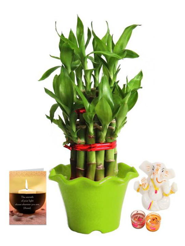 2 Layer Lucky Bamboo in Green Blossom Pot and Ganesha with Candle Combo