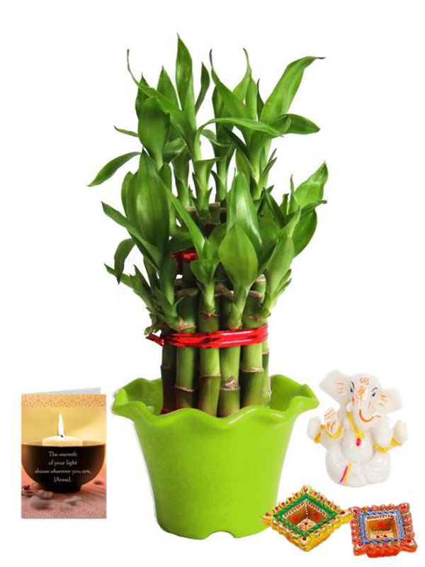 2 Layer Lucky Bamboo in Green Blossom Pot and Ganesha with Diya Combo