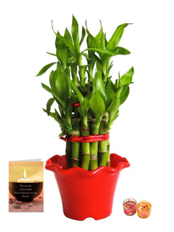 2 Layer Lucky Bamboo in Red Blossom Pot with Candle Combo