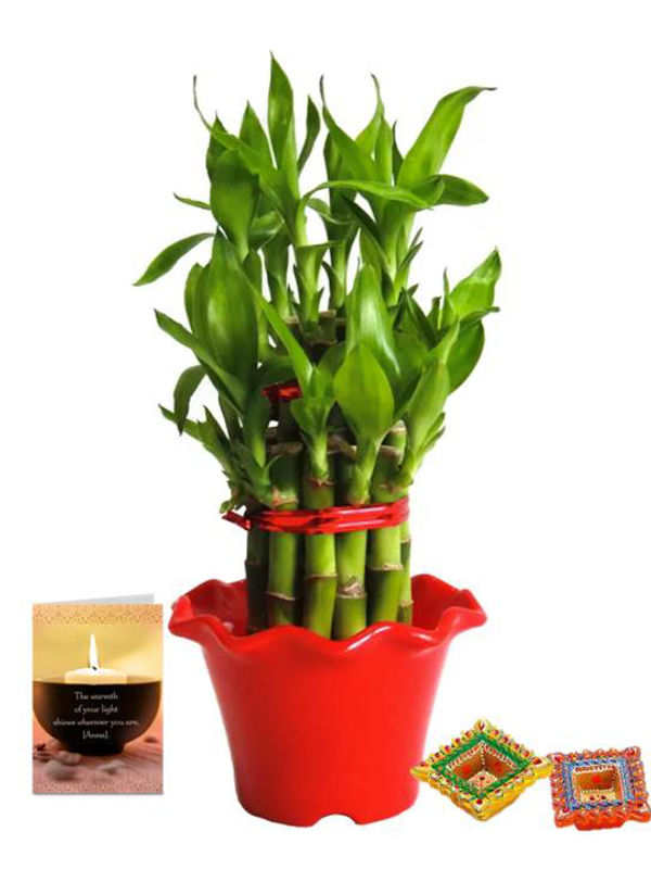 2 Layer Lucky Bamboo in Red Blossom Pot with Diya Combo