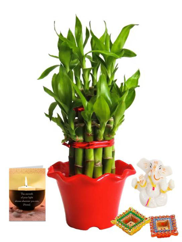 2 Layer Lucky Bamboo in Red Blossom Pot and Ganesha with Diya Combo