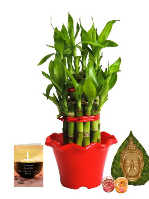2 Layer Lucky Bamboo in Red Blossom Pot and Leaf Face Buddha Candle Combo