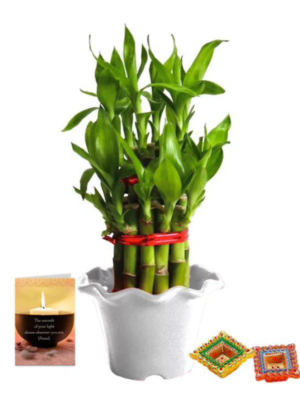 2 Layer Lucky Bamboo in White Blossom Pot with Diya Combo