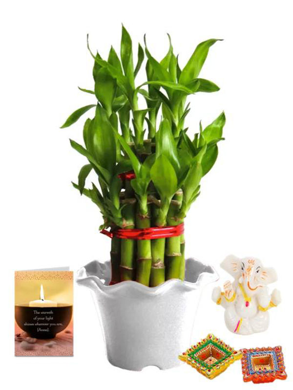 2 Layer Lucky Bamboo in White Blossom Pot and Ganesha with Candle Combo
