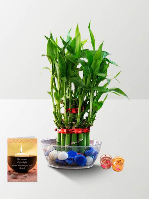 2 Layer Lucky Bamboo with Diya Combo