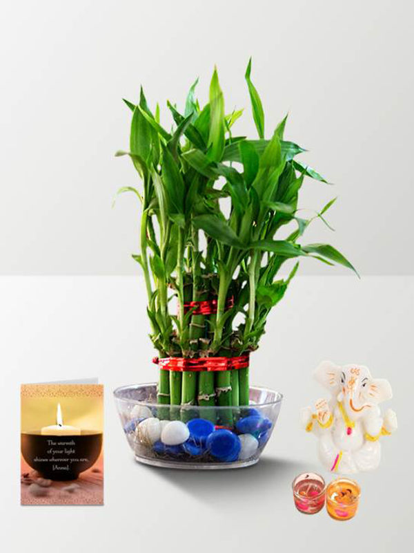 2 Layer Lucky Bamboo and Ganesha with Diya Combo