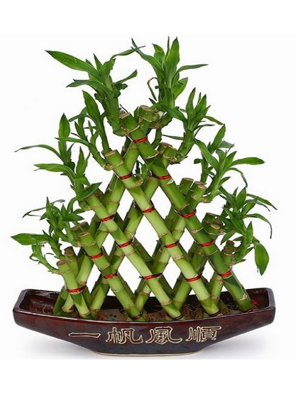 5 Layer Pyramid Lucky Bamboo in Boat Shaped Ceramic Pot