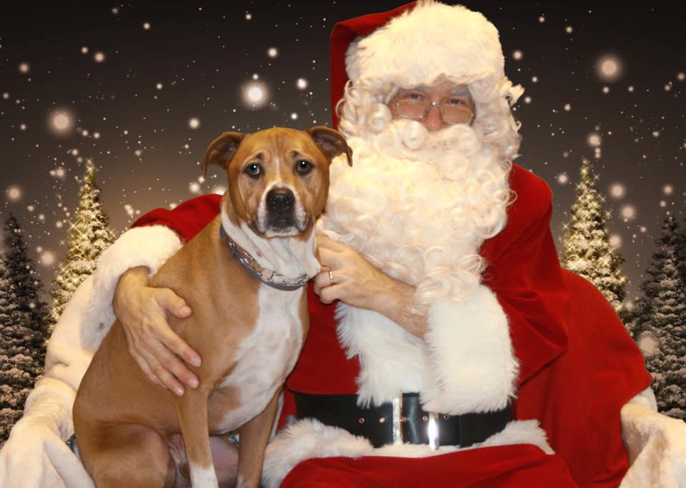 Santa Photos at woofmeow !