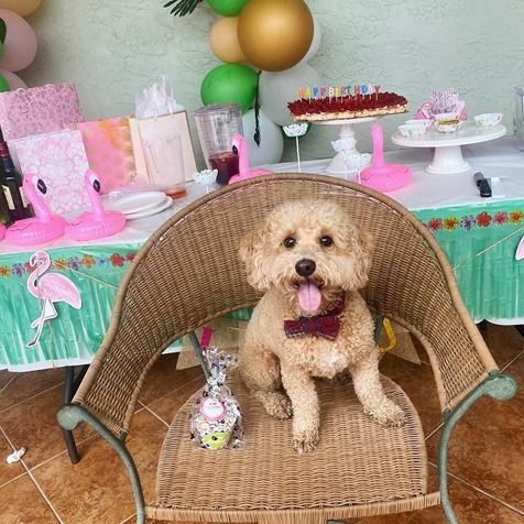 Woof Gang Bakery Birthday Party
