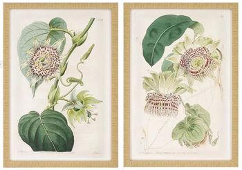 Antique Flowers, Set Of 2
