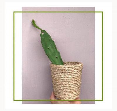 Banana fiber planter Style 2(#2172)-gallery-0