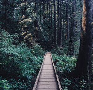Forest with wooden bridge - #getoutside Dennis Maps