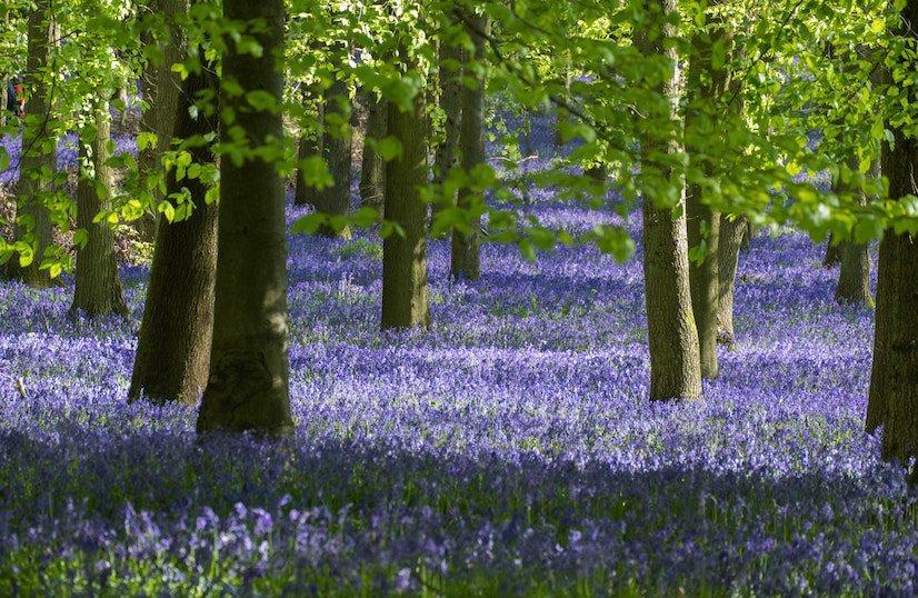 Bluebell Wood - environmental responsibilities