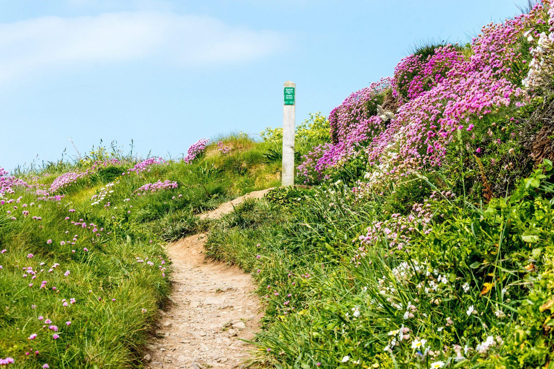 Welsh coastal path walks