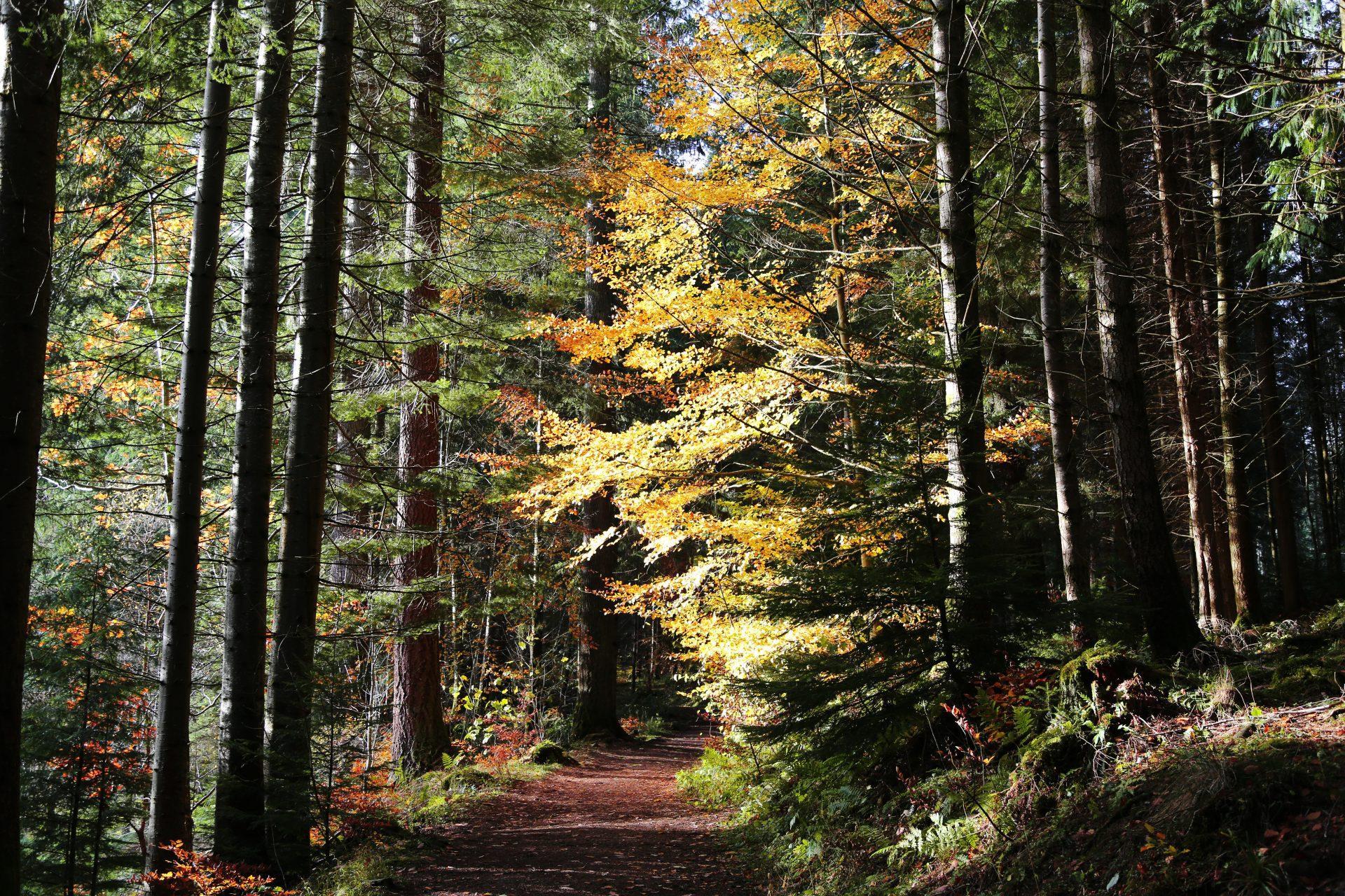 Gwydir Forest Park, Conwy, Wales