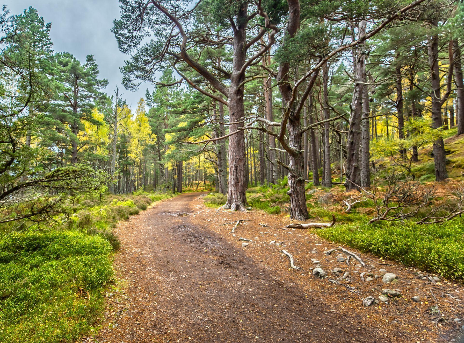Rothiemurchus Forest, Badenoch and Strathspey, Scotland