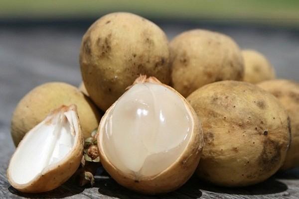 manfaat buah langsat karena mengandung antioksidan
