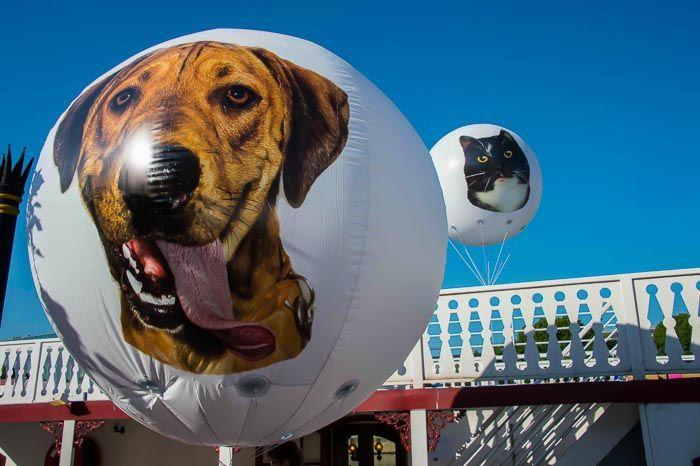 ballon géant 2.5m spa avec un chien